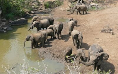 Innovation at the waterhole